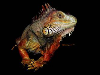 lizard cutout by skilly007