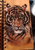 TIGER by robyncm