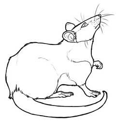 Free Rat Lineart by BasiliskZero
