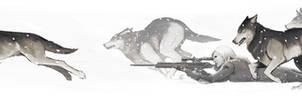 Le loup dans la meute des renards by semsei