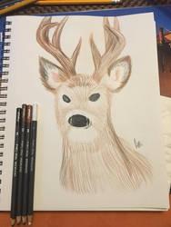 Deer wip by AmyCakes05