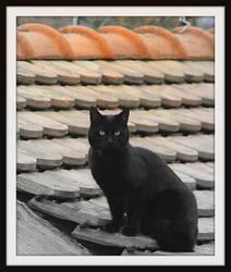 Black cat by smoothtiger