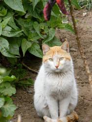Street cat 1 by Hashem7