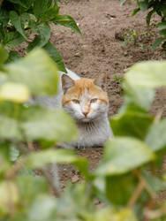 Street cat 3 by Hashem7