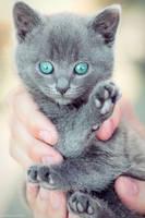 Blue eyes by do0dz