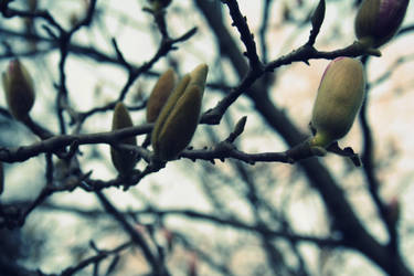 spring is coming. by forgetmenotdarling