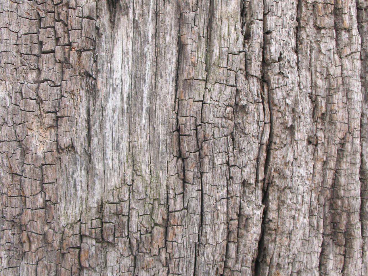 Old Wood texture 3 by Random-Acts-Stock