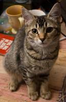 Cat stock 11 by Random-Acts-Stock