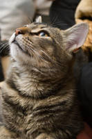 Cat stock 16 by Random-Acts-Stock