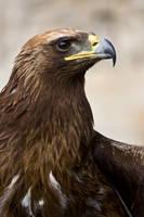 Bird of Prey 30 by Random-Acts-Stock
