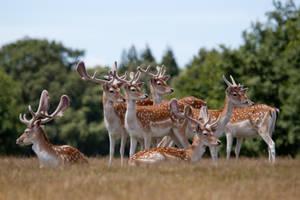 Deer stock 6 by Random-Acts-Stock