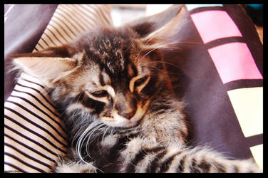 kitty by jimmyjacks
