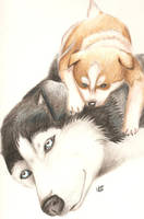 Siberian Huskies by Yanomie