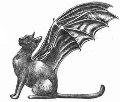 Bat-winged cat by MidnightTiger8140