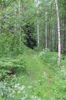 Finnish forest by Henu96