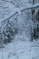 First snow by Henu96