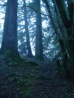 Misty 3 by SephirothXer0-Stock