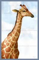 Watercolor Photo-study Giraffe by Freha