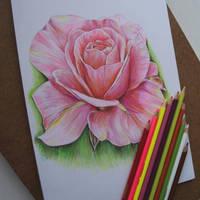 rose by dariatroshkina
