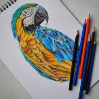 parrot by dariatroshkina