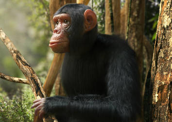 3D model of a chimpanzee by Mattiasedstrom