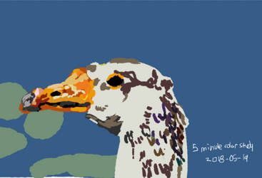 Five Minute Color Study: Duck! by ExudeArt