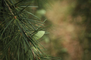 A walk in the wood by KathleenOCeann