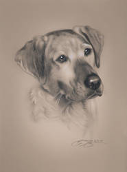 Realistic Dog Drawing by golfiscool