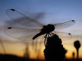 Wings by DeingeL