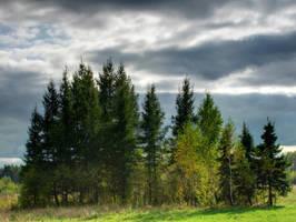 Trees by DeingeL