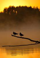 Gulls Meeting Sunrise by DeingeL