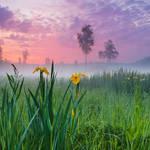 At the Dawn by DeingeL
