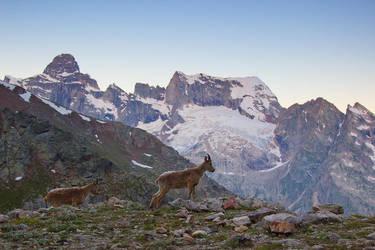 Mountain Goats by DeingeL