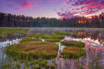 The Paw Print Island by DeingeL