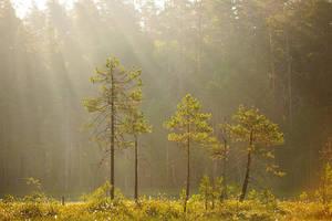 Tree Sisters by DeingeL