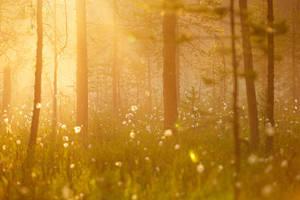 Golden Forest by DeingeL
