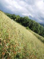 Parallel Field of Summer by xLettingGo