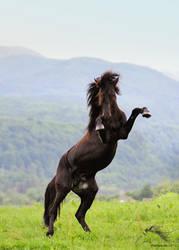 Wild stallion on the hind legs - 2013 by rivkin-nn
