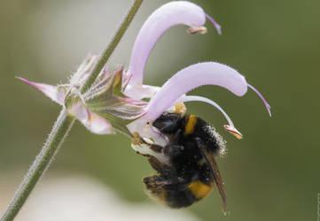 Pollen Crown! by Mincingyoda
