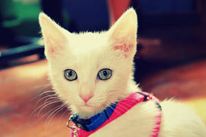 Kitten One by SpiffyPaintPhotos