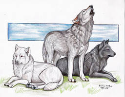 ... Northern Wolves ... by NatsumeWolf