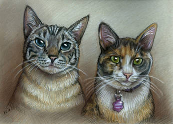 Meow-Meow Pet Portrait by NatsumeWolf