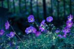 Nighttime Blossoms by Splippyfop