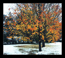 Fall On Ice by CleverConveyence