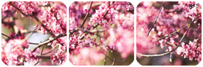 Pink Divider by LaraLeeL