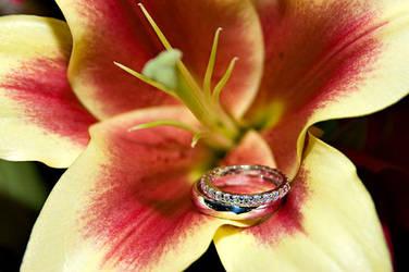 Wedding Rings in a Flower by Ceardach
