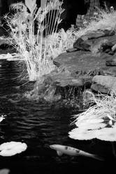 Waterfall and Koi by Ceardach