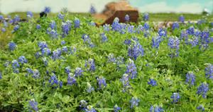 Bluebonnet Oasis by TexasPanda