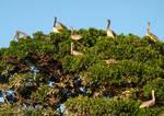 Pelican Santuary by Robert-Hartland