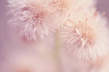 Dandelion Wonderland by Robert-Hartland